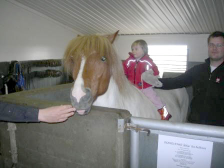 """Hekla og vinur hennar Álfur frá Selfossi eða """"skjóni minn"""" í Langholti veturinn 2007."""