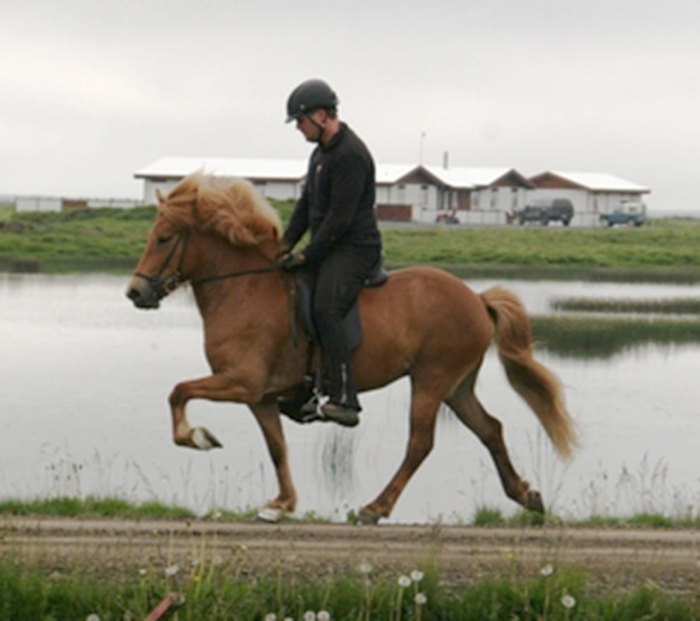Hún fór undir Krák frá Blesastöðum í vor og sónarskoðaðist fylfull um miðjan júní 2009.