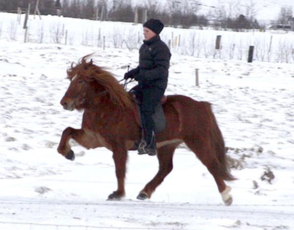 Sara frá Sauðárkróki