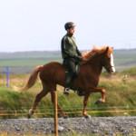 Röskva 4 years old, summer 2010. Rider Ólafur Andri Guðmundsson.