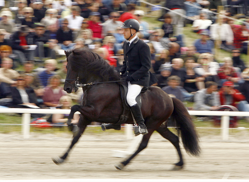 Auður frá Lundum, rider Jakob Sigurðsson