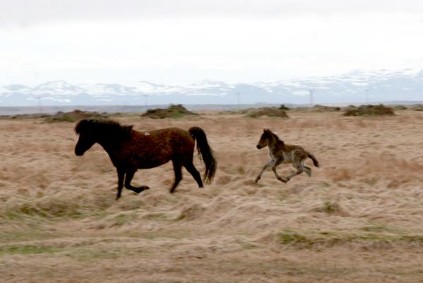 Mæðgurnar í lok maí 2008.
