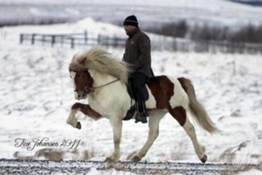 Hákon í febrúar 2011, knapi Erlingur Erlingsson (Mynd: Tine Johanson)