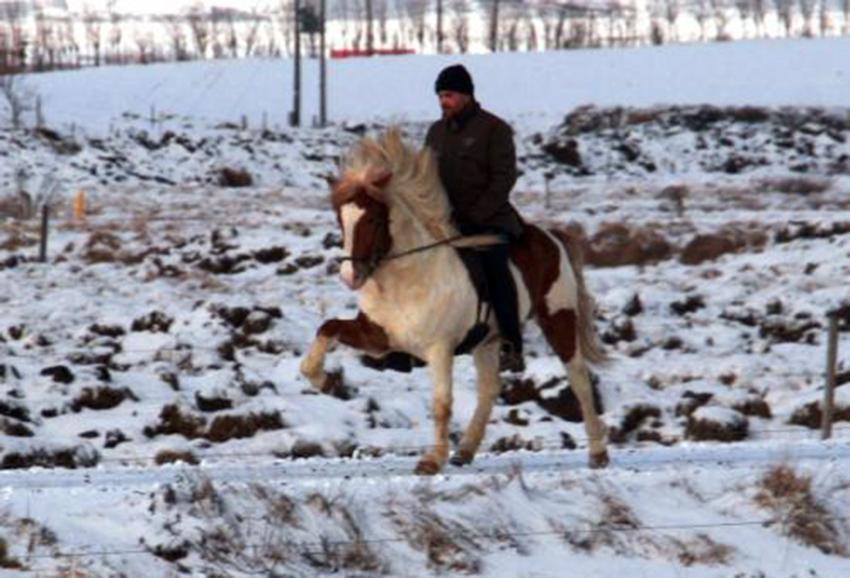 Hákon fæddur 2007, F: Álfur frá Selfossi