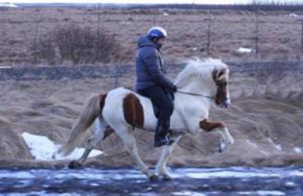 Hákon og Viðar