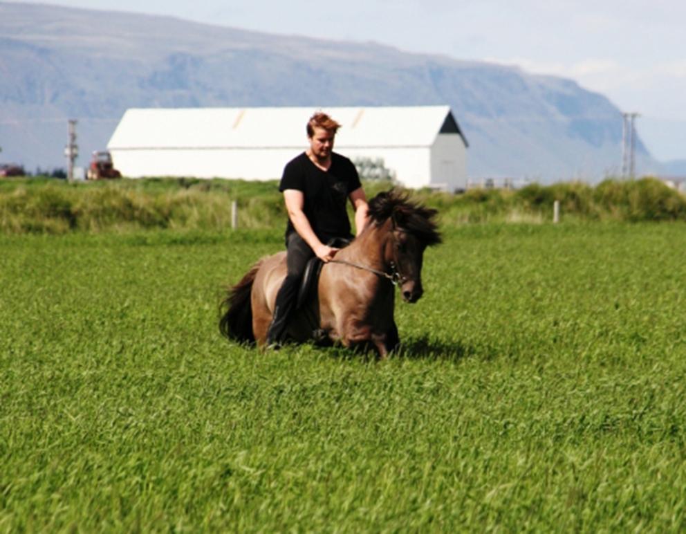 Hannes og Reykur í túninu á Hamarsey. Sá móálótti er 5 vetra undan Adam frá Ásmundarstöðum og Hviðu frá Ingólfshvoli (9,5 vilji, 9,0 tölt, stökk og fegurð í reið). Reykur er efni í góðan keppnishest.
