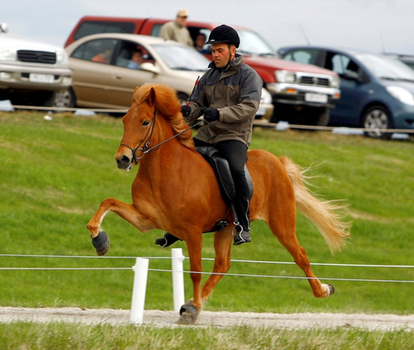 Hátíð frá Úlfsstöðum, 5 vetra á Landsmóti 2006 á Vindheimamelum í Skagafirði.