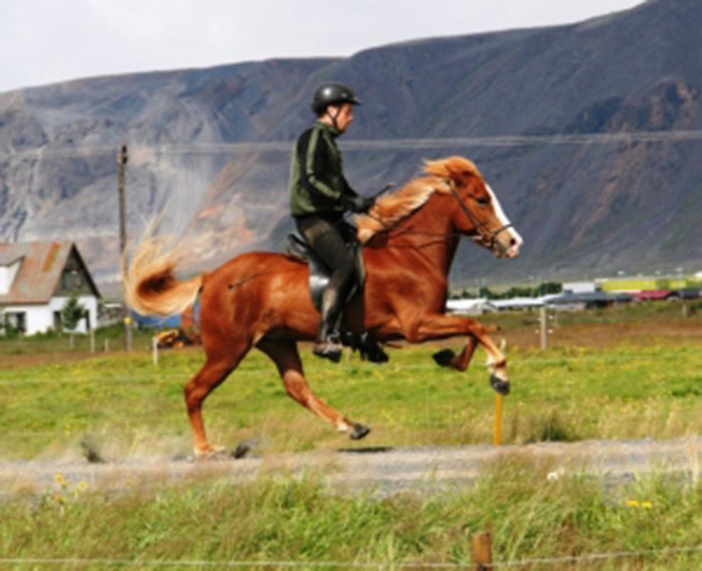 Röskva frá Sauðárkróki, knapi Ólafur Andri Guðmundsson. Ólafur Andri hefur séð um þjálfun Röskvu síðastliðnar vikur, en hann er yfirtamningamaður í Austurási.