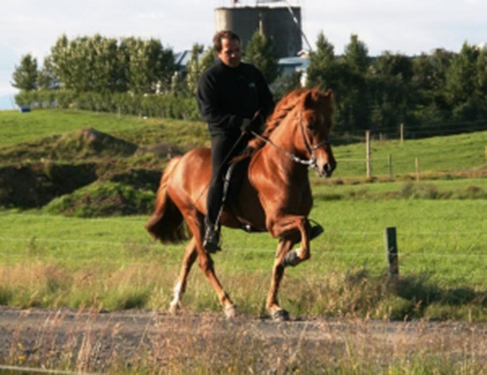 Sara frá Sauðárkróki í júlí 2010, knapi Erlingur Erlingsson